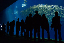The Largest Tank In The Open Sea Exhibit