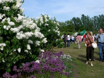 The Lilac Garden Of P.Upitis