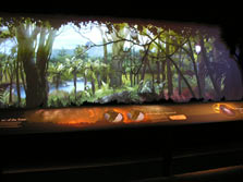 The Loss Of Native Forest And Birdlife Highlighted In A Display