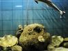 The Marine Aquarium And Research Centre (MARC)  Digha West Benga