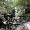 The Mill Creek Trail