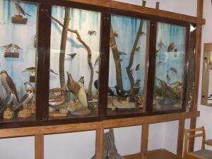 El Museo de Historia Natural