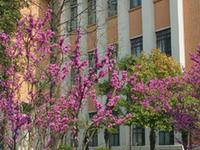 Universidade Tongji