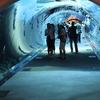 The Shark Tunnel Of Dubai Aquarium & Underwater Zoo