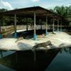 The Teluk Sengat Crocodile Farm - Kota Tinggi Town