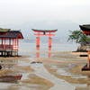 The Torii At Low Tide From The Inside Of The Shrine