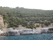 The Vegetation In Palmaria