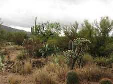 Three Bar Route - Tonto National Forest - Arizona - USA