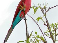 Special Birding Safari