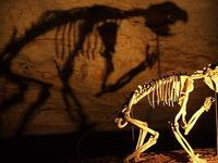 Naracoorte Caves National Park