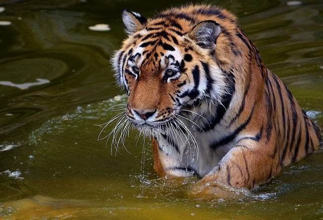Ranthambhore Tour From Jaipur By Car And One Ride Jungle Safari Photos
