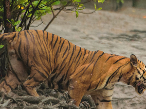 Sundarban National Park And Wildlife Tour Fotos