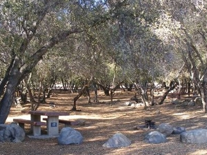 Sequoia Tillie Creek campground