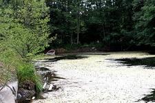 Tjern Pond - Moss Norway