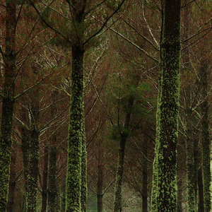 Tongariro Conservation Area Plantations