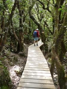 Tongariro Crossing Walk Hiker