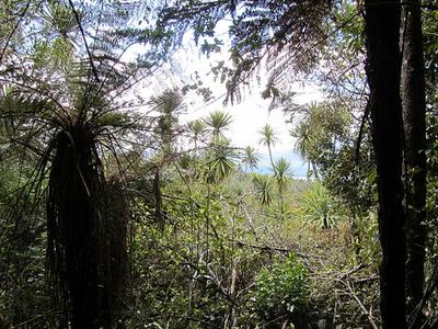 Tongariro Forest Native Plants
