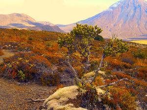 Tongariro Norte Circuito