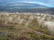 Tongariro Trail Views