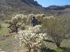 Tonto Cholla Picnic Site - Tonto National Forest - Arizona - USA