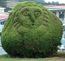 Topiary At Parque Francisco Alvarado