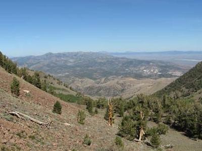 Toquima Range From Mt. Jefferson