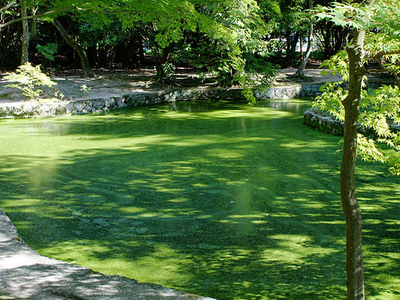 Toshodaiji Sokai Garden