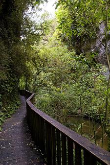 To The Bridge! - Mangapohue