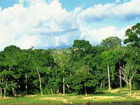 Dzanga-Sangha Parque Nacional