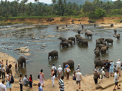 Tourists Attraction On Elephants Bathing