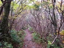 Trail Inside Craggy Gardens - Asheville NC