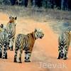 Tadoba National Park Trekking y senderos naturales