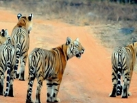 Tadoba National Park Trekking And Nature Trails