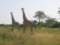 Day Trip To Saadani National Park - From Tanga City