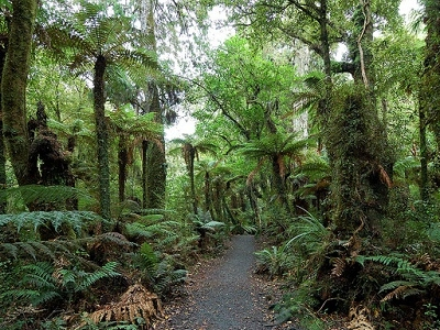 Trail @ The Catlins NZ South Islands