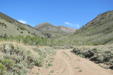 Trail Through Arc Dome Wilderness