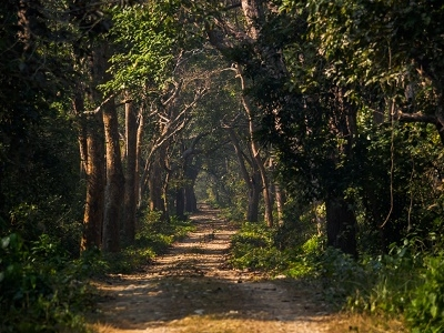 Trail Through Bardia National Park Forest Area - Nepal
