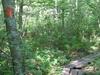 Trailwoodscvty