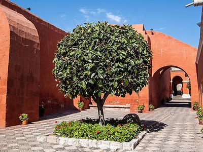 Tree & Inner Courtyards