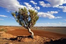 Tree Inside Mongolia Gobi Desert