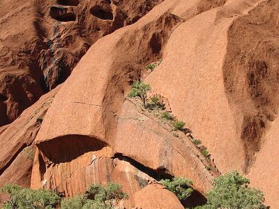Trees Up Uluru