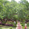 Tree Views