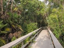 Tropical Hardwood Hammock - Everglades National Park FL - Mahogany Hammock Trail