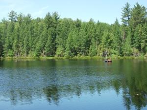 Trout Lake Bog