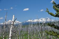 Trout Lake Trail Views - Glacier - Montana - USA