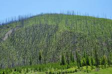 Trout Lake Trailviews - Glacier - Montana - USA