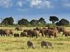 Tsavo East National Park Elephant Herd