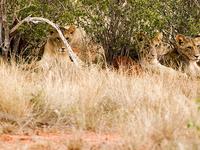 Severin Tsavo Road Safari