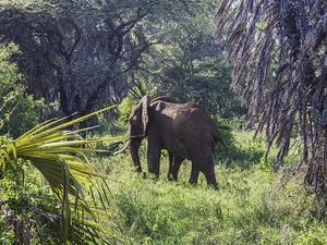 Kenya Wildlife Safari & Beach Holiday Fotos