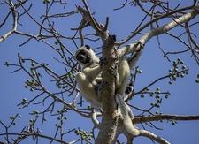Tsingy De Bemaraha Monkeys @ Madagascar